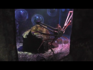 Crab tiny tank