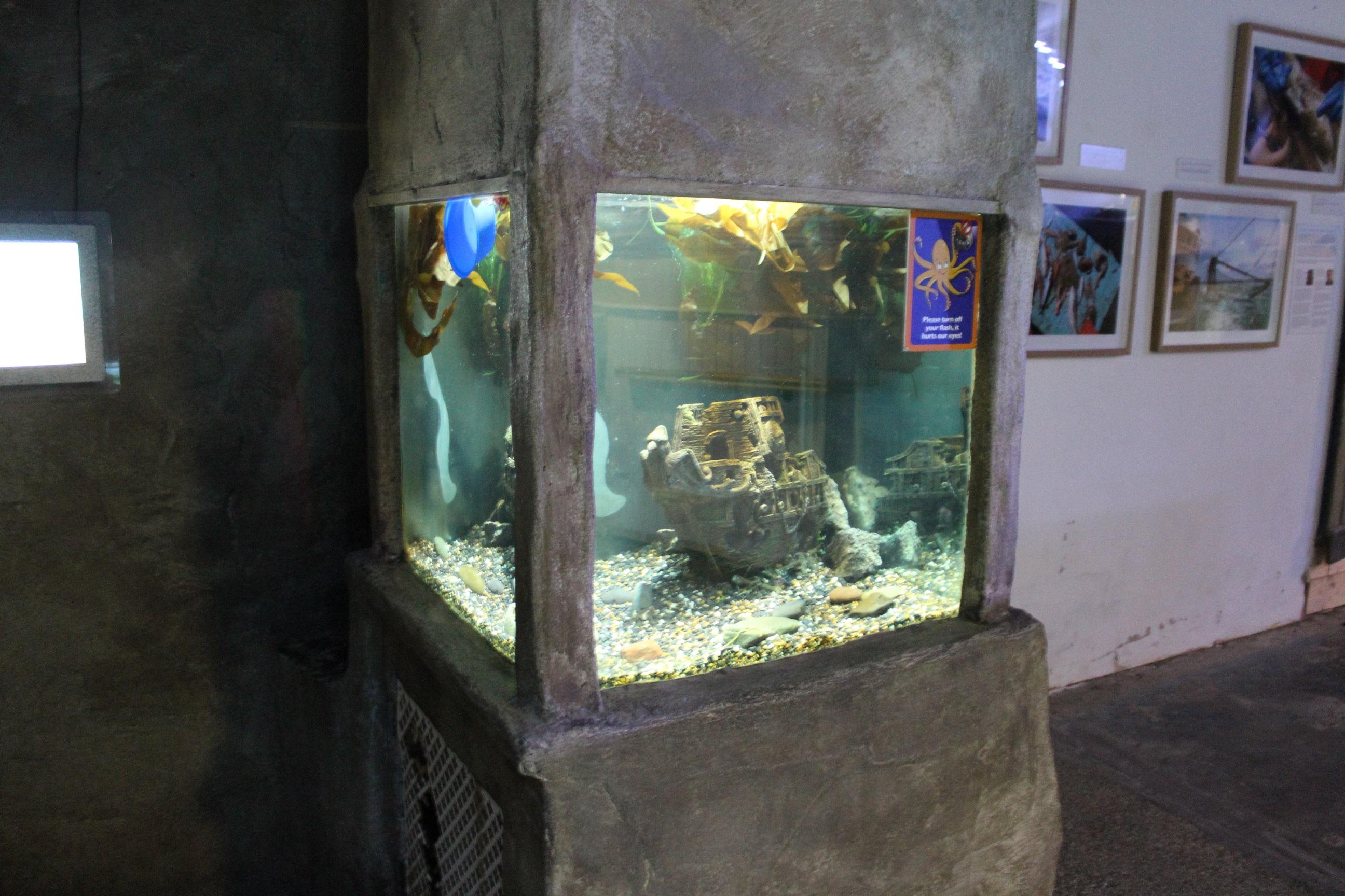 Case study: Octopus exhibits - Sea Lies