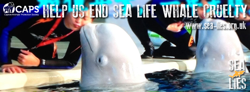 SEA LIFE whale cruelty copy