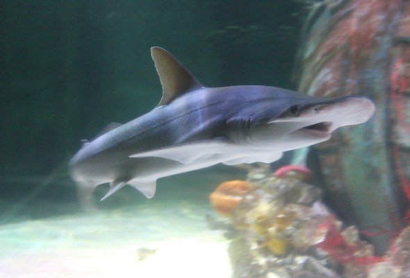 Case study sharks in aquariums sea lies for Small sharks for fish tanks