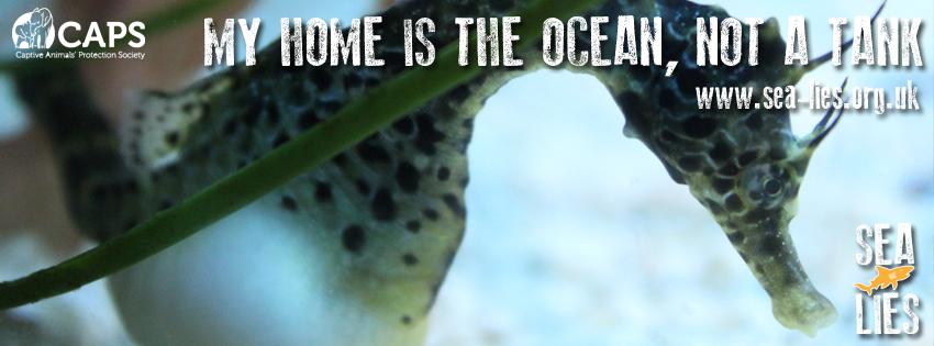 ocean not tank copy