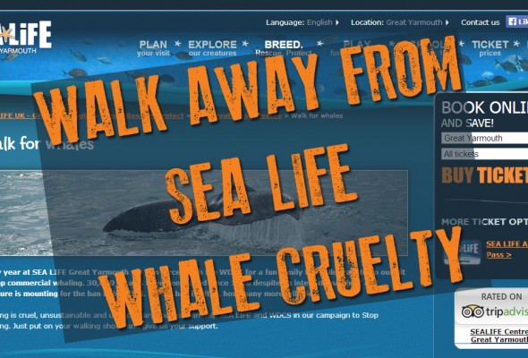 Walk for whales: Walk away from SEA LIFE's whale cruelty