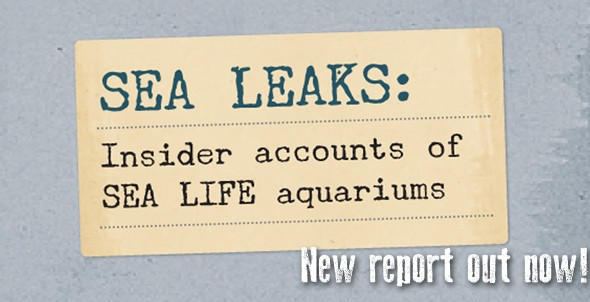 SEA LEAKS: Brave whistleblowers expose dirty secrets of SEA LIFE aquariums