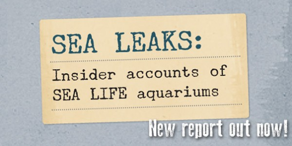 Sea Leaks