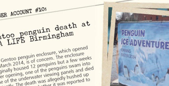 Insider account #10: Alleged Gentoo penguin death at SEA LIFE Birmingham