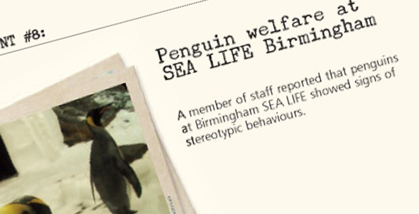 Insider account #8: Penguin welfare at SEA LIFE Birmingham