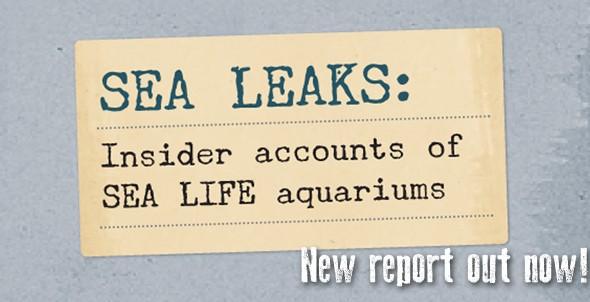 SEA LEAKS: Brave whistleblowers expose dirty secrets of SEA LIFE aquariums