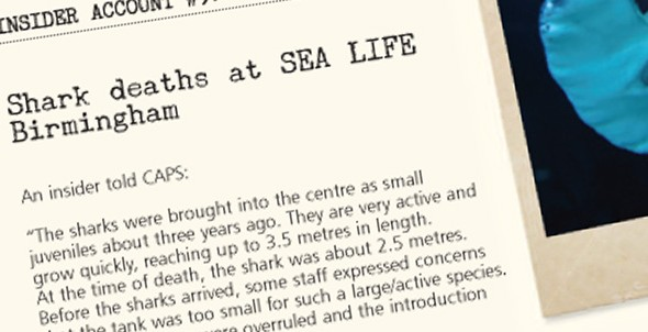 Insider account #9: Shark deaths at SEA LIFE Birmingham