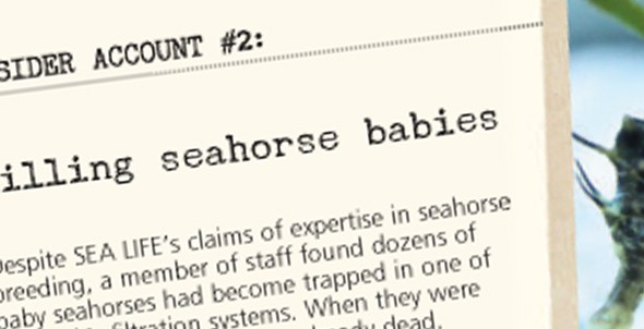 Insider account #2: Killing seahorse babies