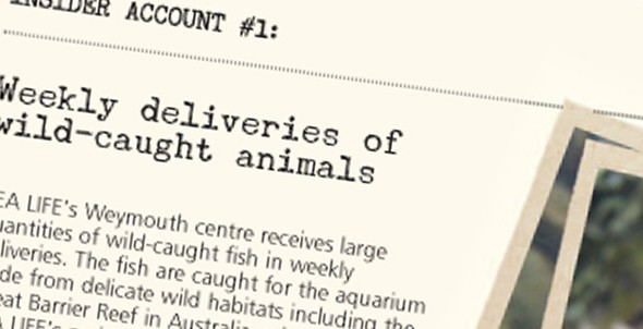 Insider account #1: Weekly deliveries of wild-caught animals